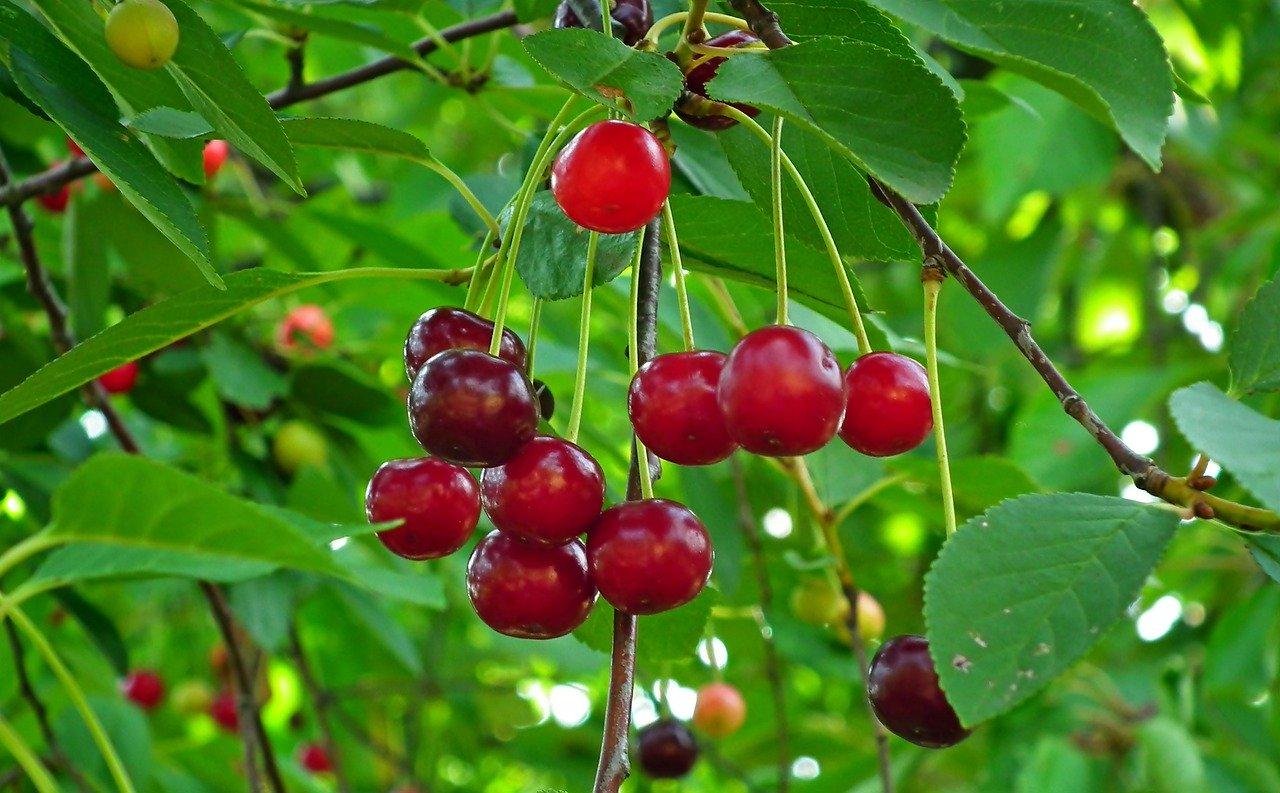 果物の種蒔き