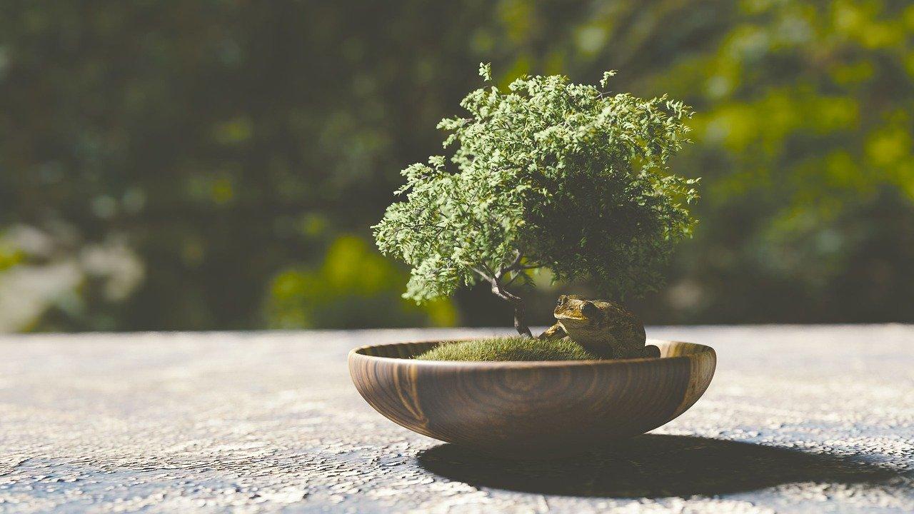 盆栽の植え替え