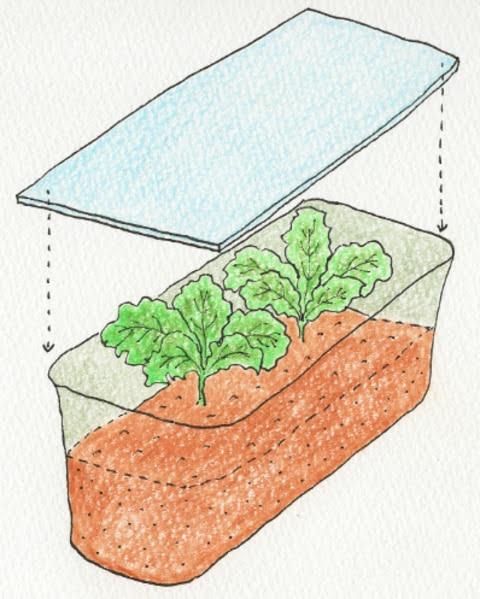 リーフレタスを植え付けたプランターに透明のアクリル板で屋根を作る。