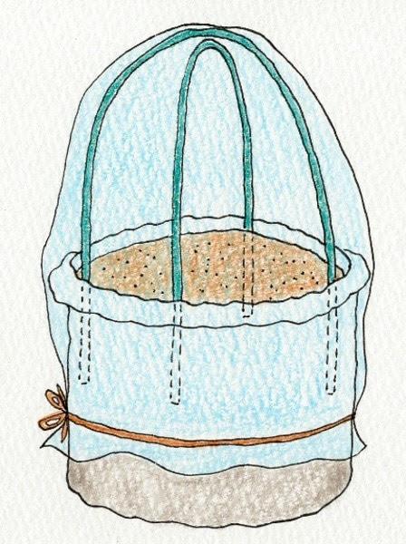 ダイコン(大根)の袋栽培。透明の袋を被せる。