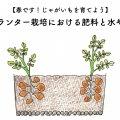 じゃがいもを育てよう!プランター栽培における肥料と水やり