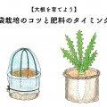 大根を育てよう!袋栽培のコツと肥料のタイミング