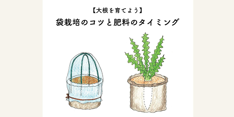 【大根を育てよう】袋栽培のコツと肥料のタイミング