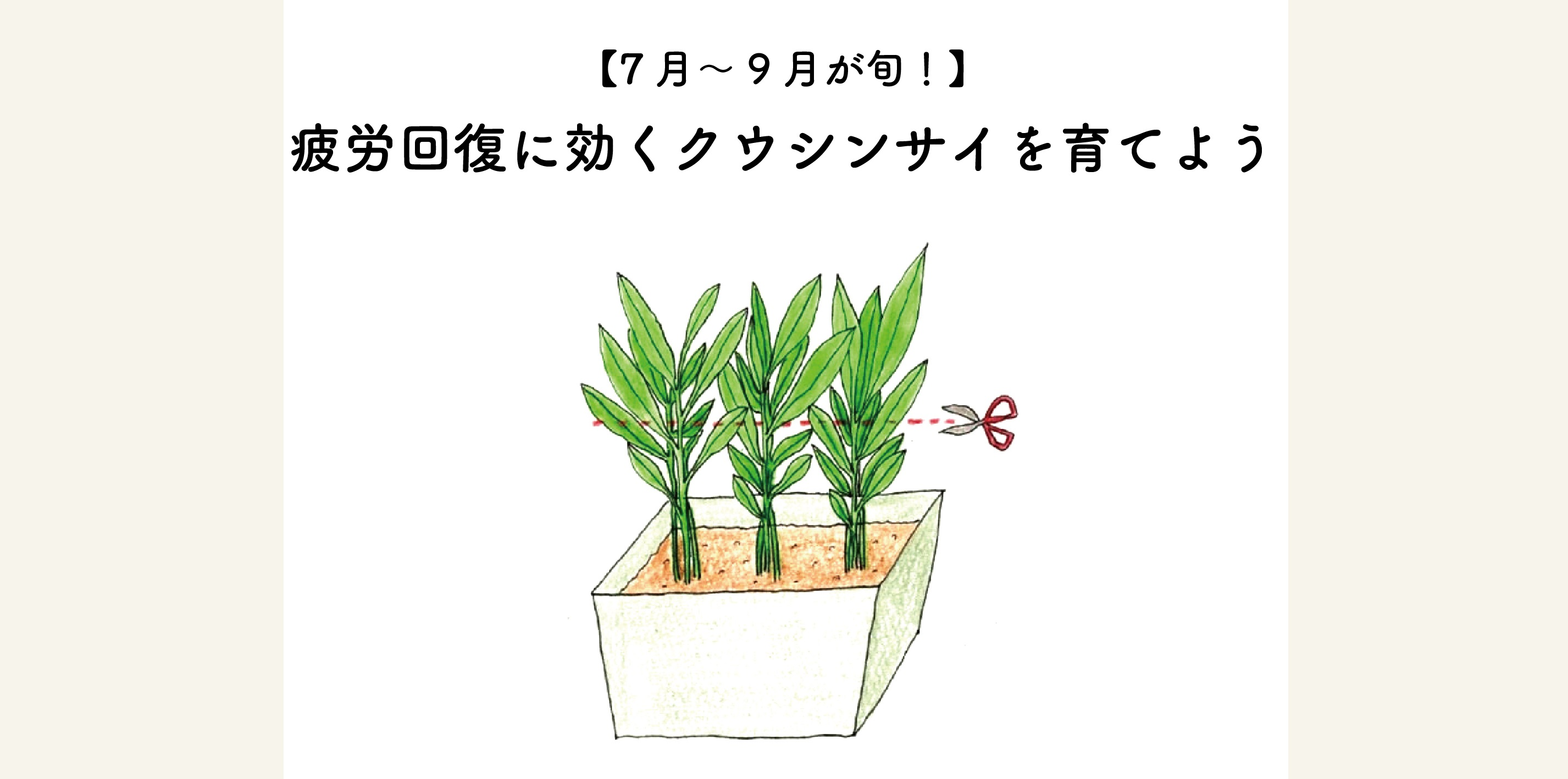7月から9月が旬の空心菜の育て方