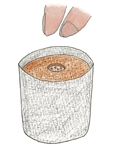 菜の花の種まきのイラスト解説