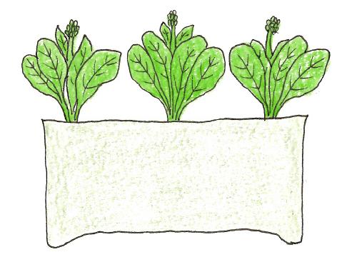 菜の花の収穫