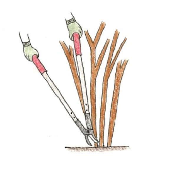 庭木のお手入れ(剪定)方法_Q&A_ロッパーの使い方説明イラスト01