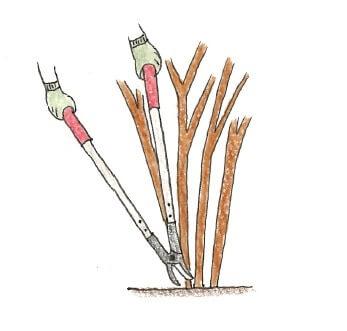 【太い枝も楽々剪定】ロッパーの活用術