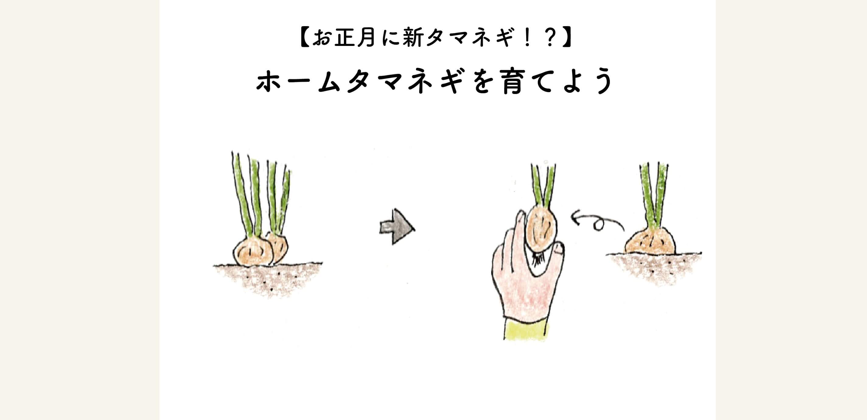 玉ねぎ 葉 新