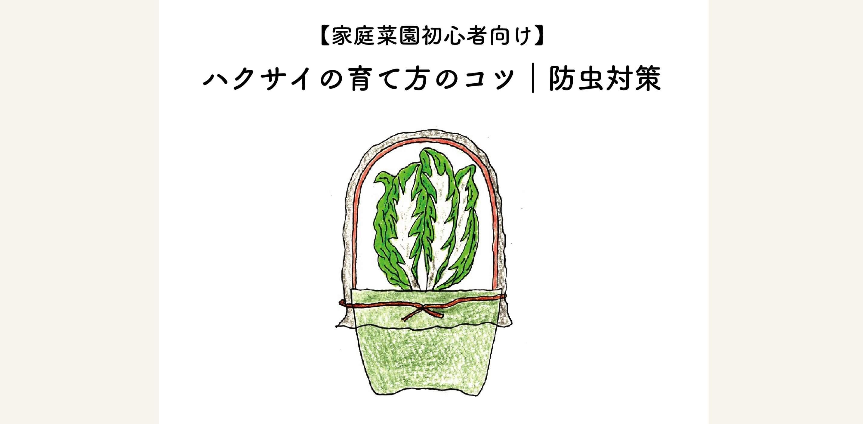 【家庭菜園初心者向けプランター菜園】ハクサイ(白菜)栽培のコツ 防虫対策