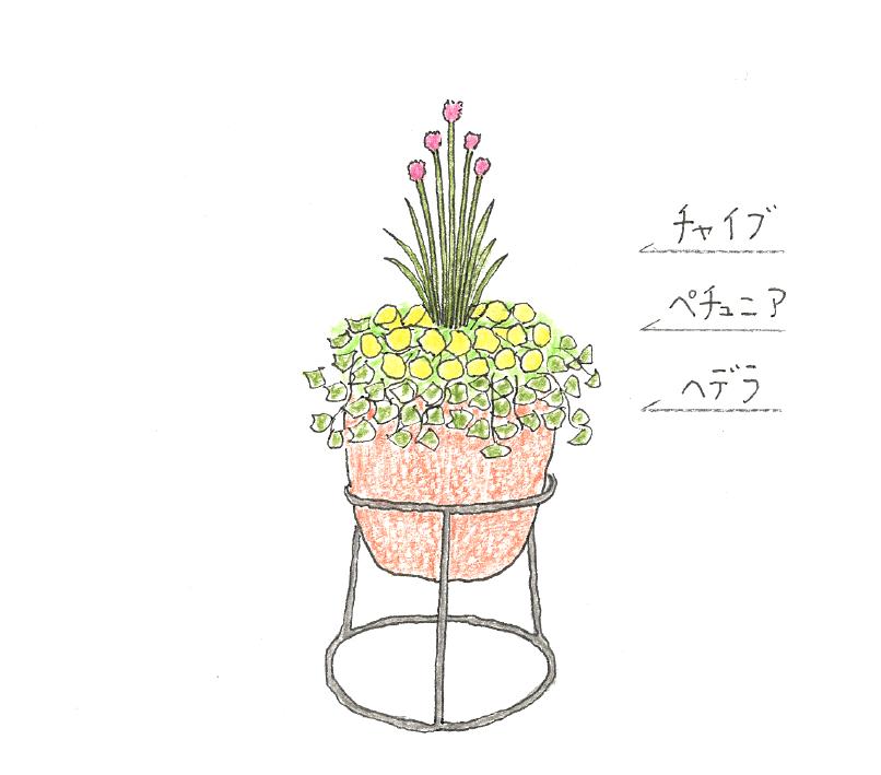 チャイブの寄せ植えのイラスト