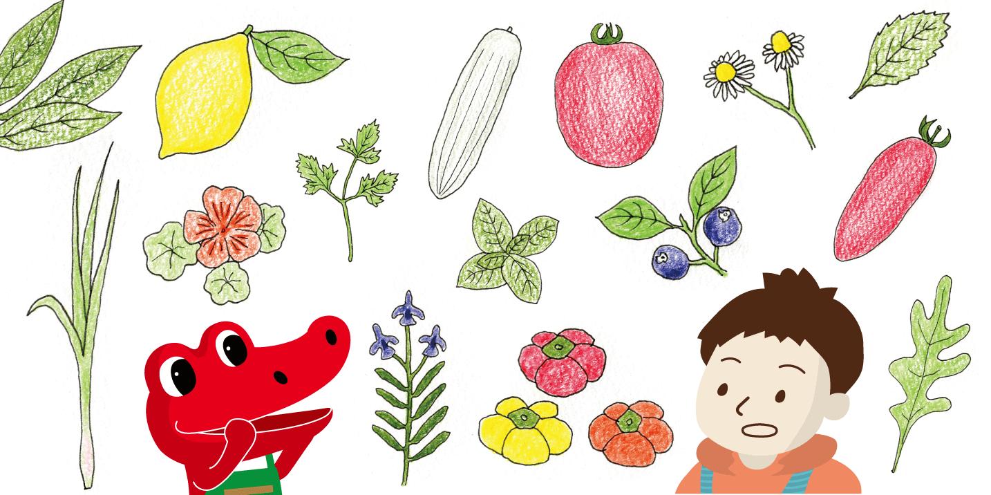 春からのベランダガーデニング。初心者にオススメの野菜や管理できる鉢・プランターの数は?
