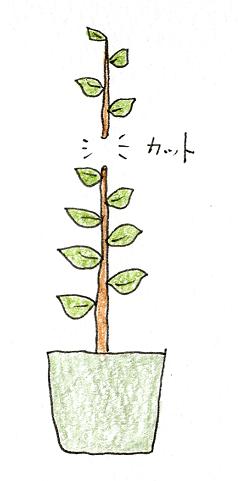 レモン・ブルーベリーを鉢植えで育てよう(レモン・剪定の仕方1)