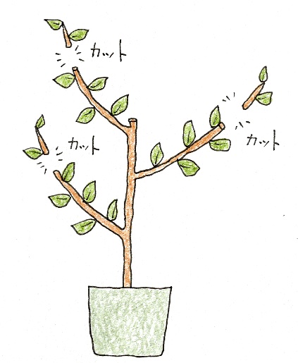 レモン・ブルーベリーを鉢植えで育てよう(レモン・剪定の仕方2)
