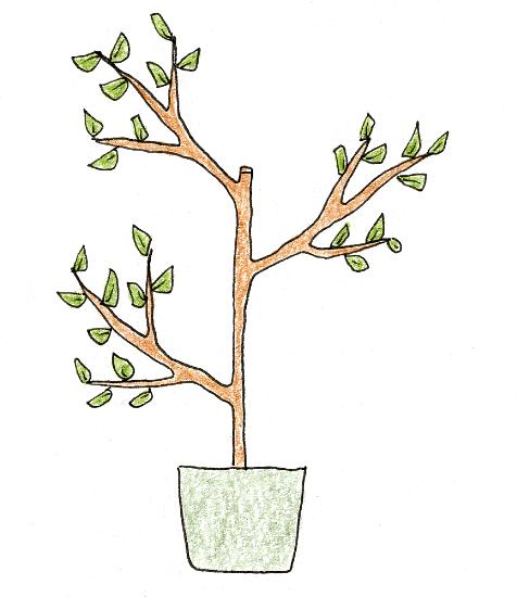 レモン・ブルーベリーを鉢植えで育てよう(レモン・剪定の仕方3)