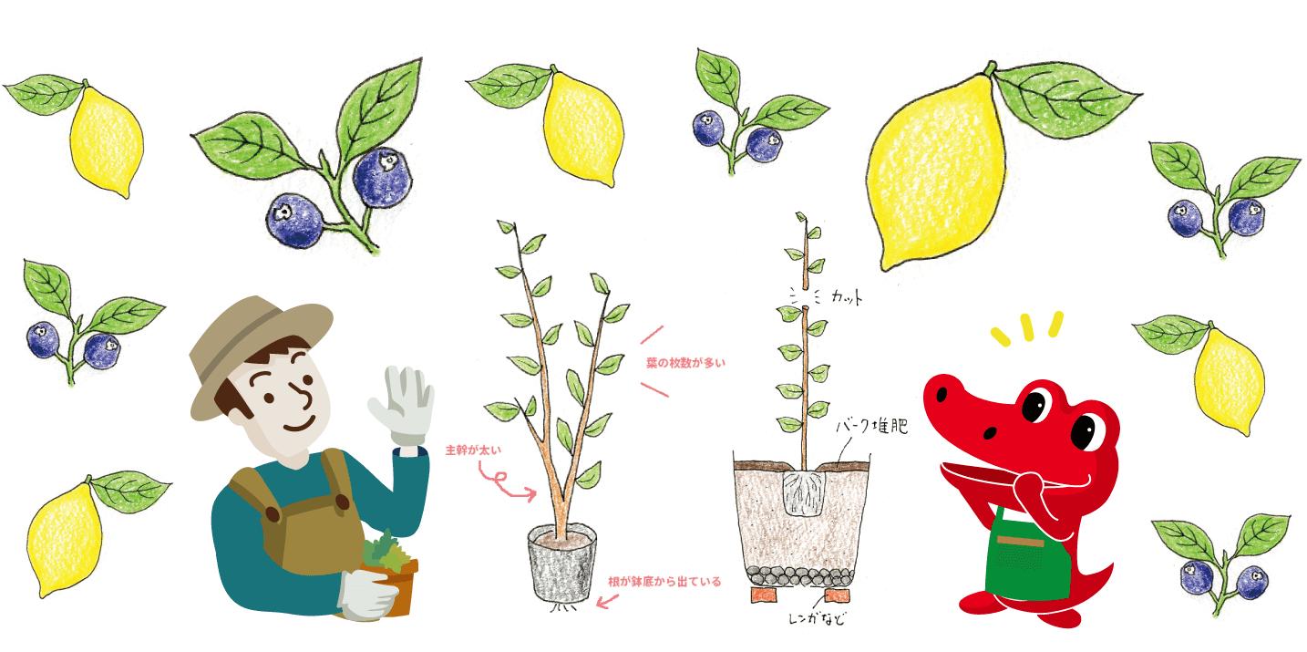 の 剪定 レモン 木