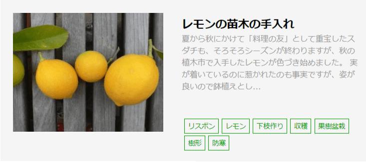 「レモンの苗木の手入れ」記事へのリンク