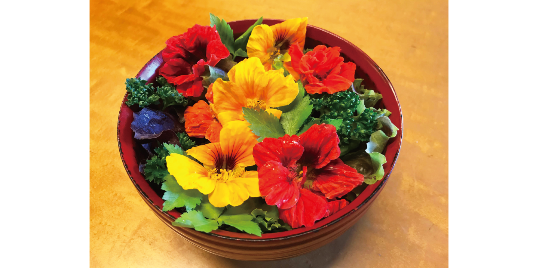 ⾷べられる花 エディブルフラワーの育て⽅