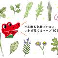 初心者にオススメのハーブ10選|育て方や収穫のコツ
