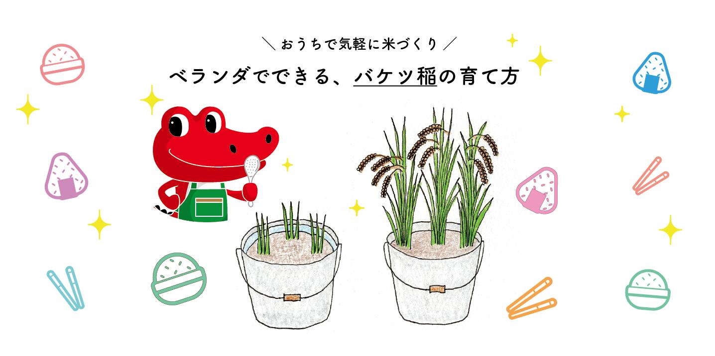 ベランダでできる、バケツ稲の育て方|おうちで気軽に米づくり