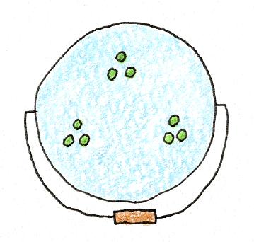 ベランダでできる、バケツ稲の育て方(稲の植え付け2)