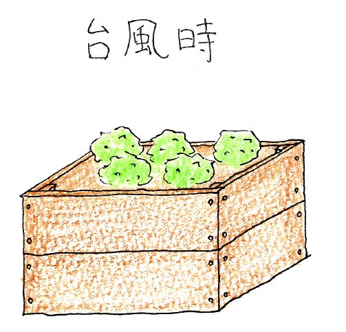 ベランダガーデニングの台風・暴風雨対策(台風ボックス)