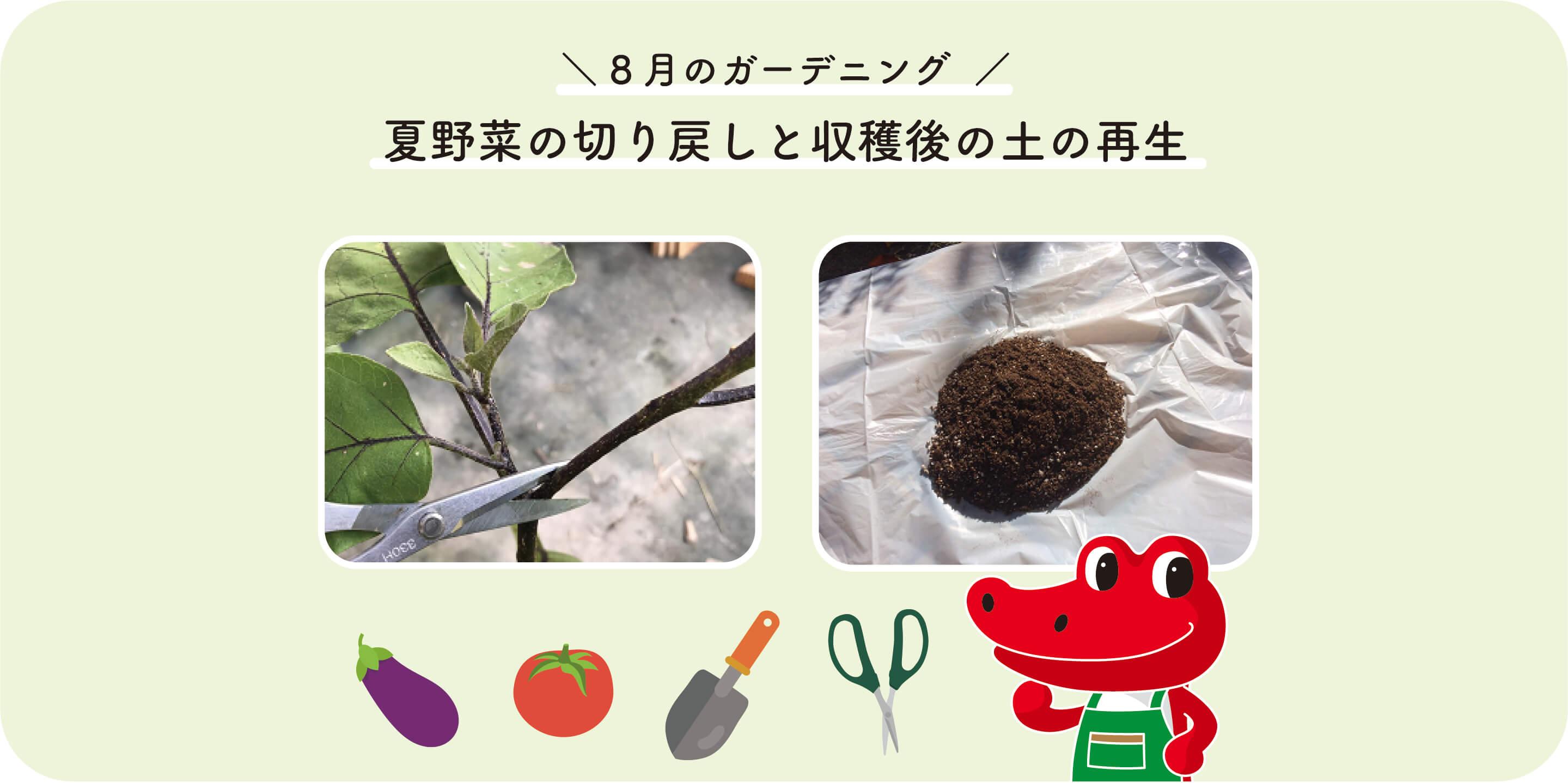 夏野菜の切り戻しと収穫後の土の再生