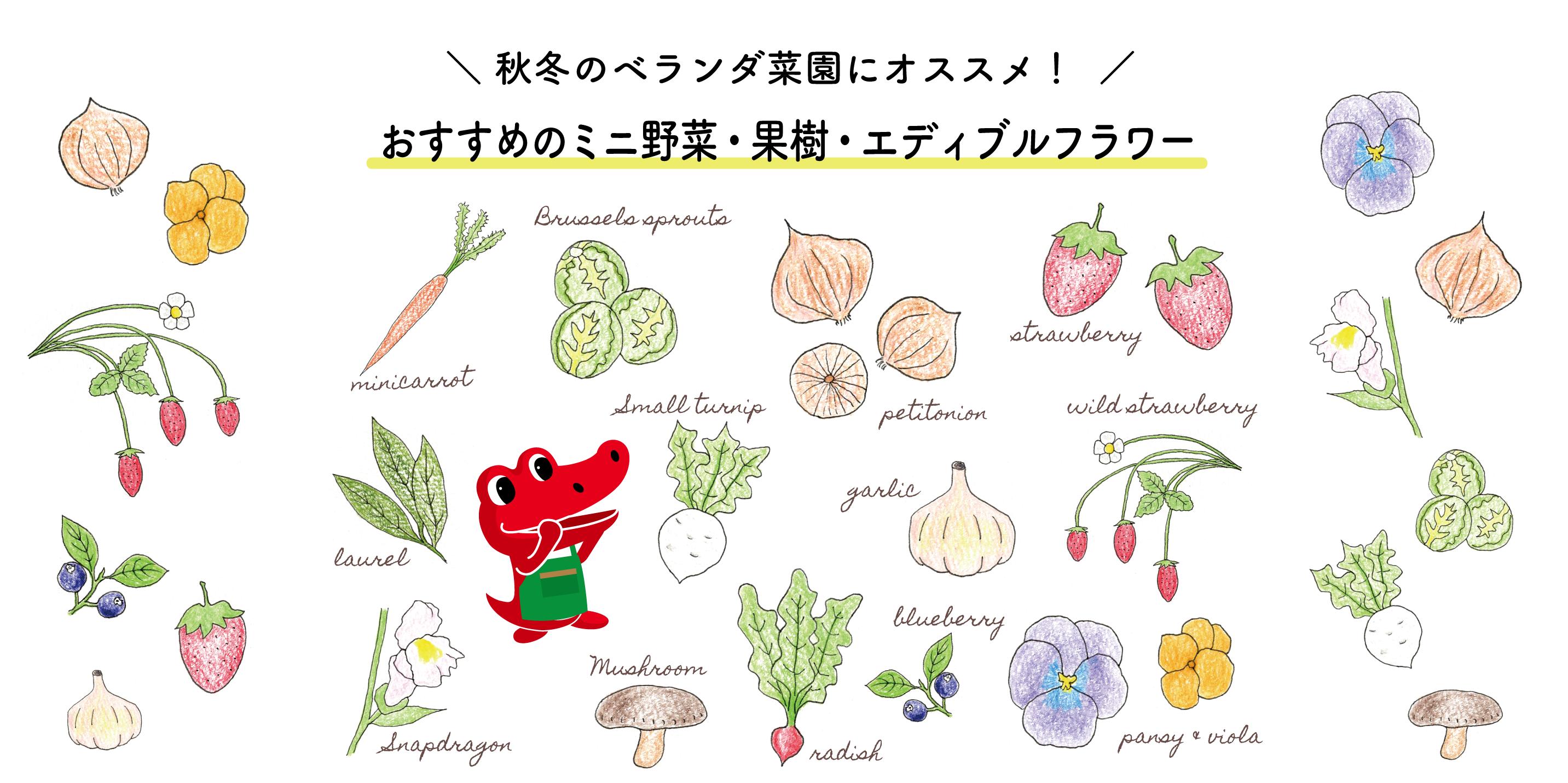 秋冬のベランダ菜園におすすめのミニ野菜、果物、エディブルフラワー12選