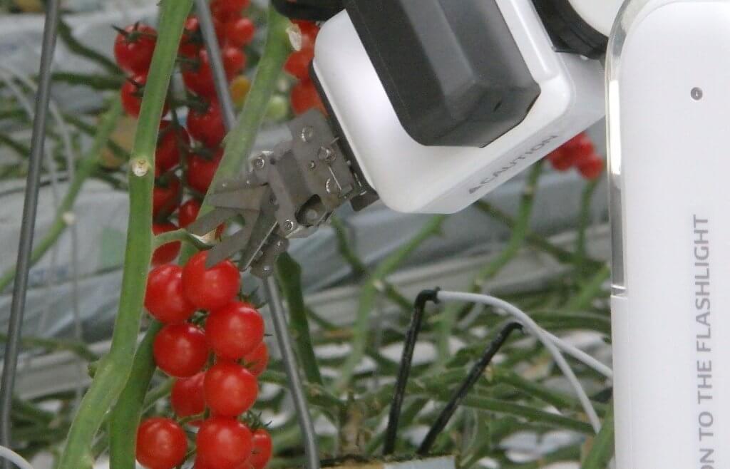 ミニトマトを収穫する自動収穫機「FARO」の写真