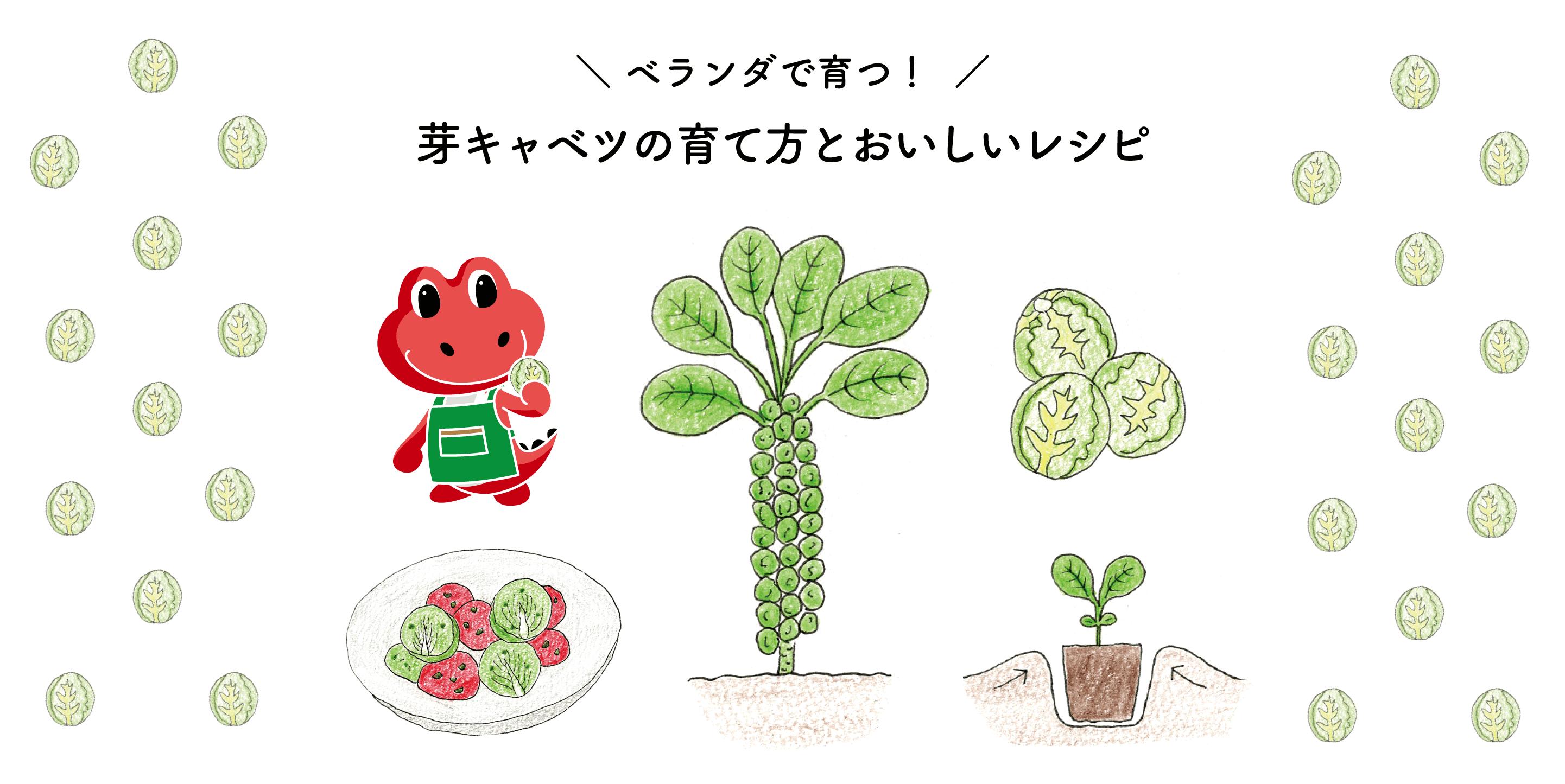 ベランダ菜園におすすめ!芽キャベツの育て方とおいしいレシピ
