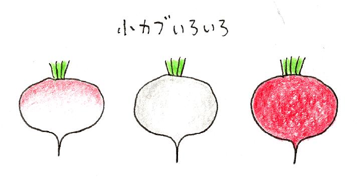 ラディッシュ(二十日大根)と小カブをベランダで育てよう_小カブいろいろ