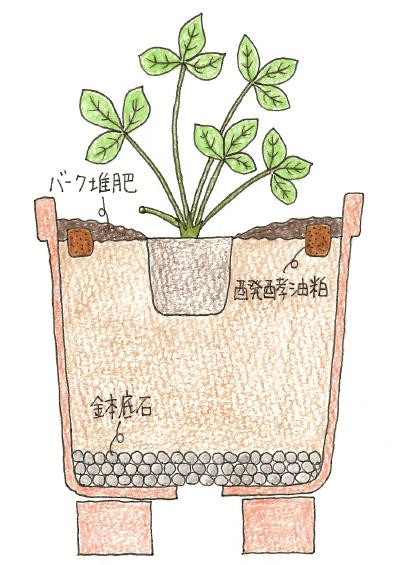 基本の植え付け例のイラスト