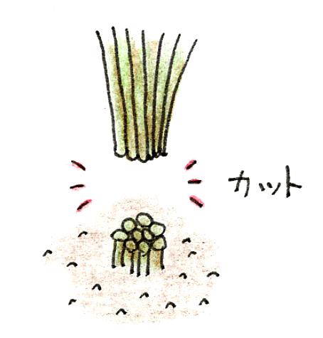 バケツ稲の育て方 ~稲刈りとカンタン脱穀~ 稲刈りのやり方イラスト