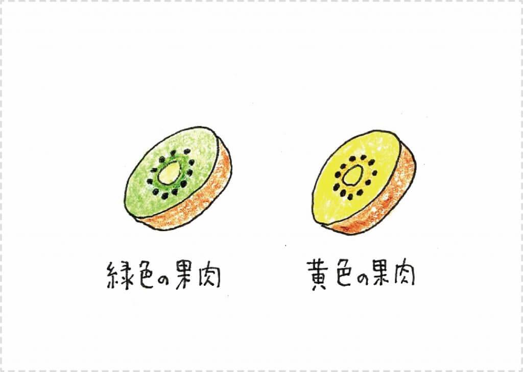 果樹盆栽_キウイフルーツのイメージイラスト