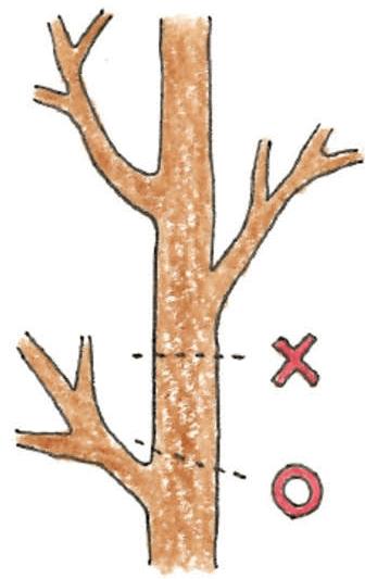 庭木のお手入れ(剪定)方法_Q&A_樹高の下げ方説明イラスト01