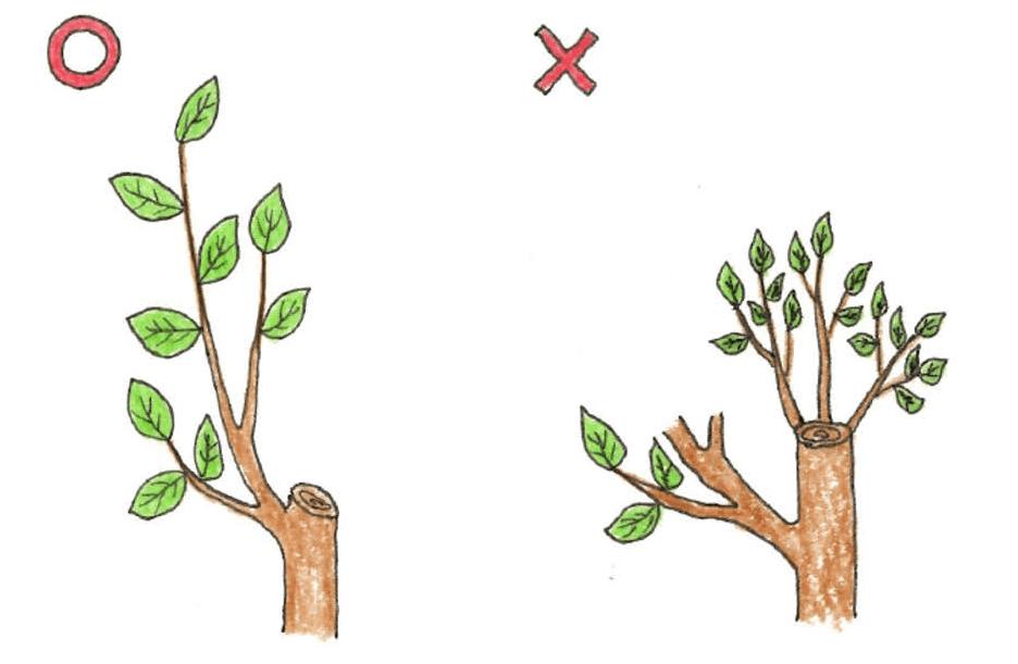 庭木のお手入れ(剪定)方法_Q&A_樹高の下げ方説明イラスト02