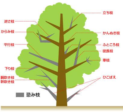 切るべき枝の見分け方_忌み枝の種類説明イラスト