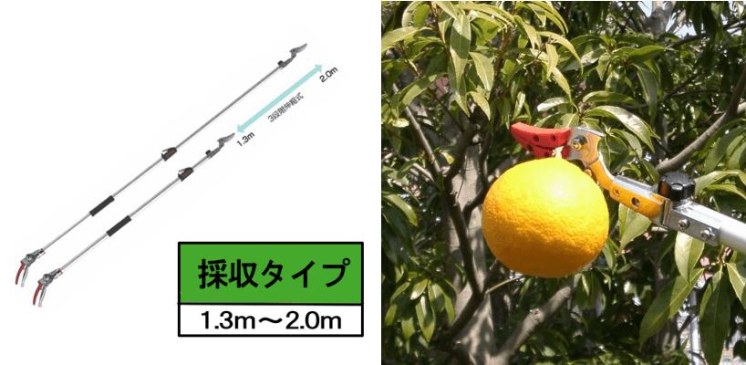 剪定作業の強い味方!「ズームチョキ」チルトR(2.0m)/採収タイプ_説明写真