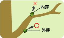 細めの枝を剪定するコツ_説明イラスト01