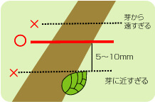 細めの枝を剪定するコツ_説明イラスト02