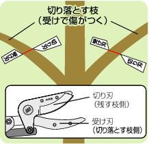 細めの枝を剪定するコツ_説明イラスト03