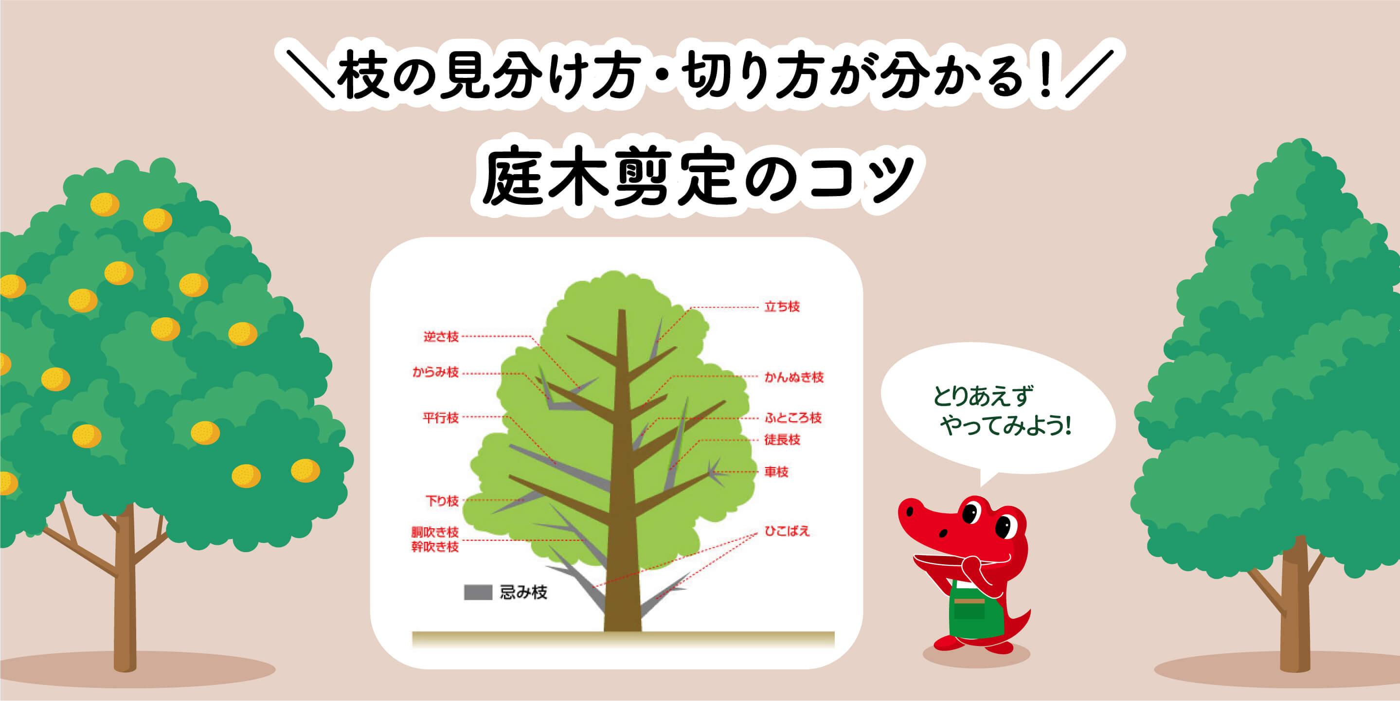 庭木剪定のコツ【枝の見分け方・切り方】