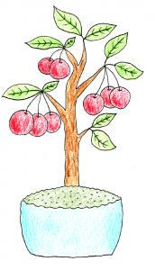 果樹盆栽_ヒメリンゴのイラスト