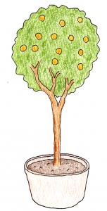 果樹盆栽_キンカンのイラスト