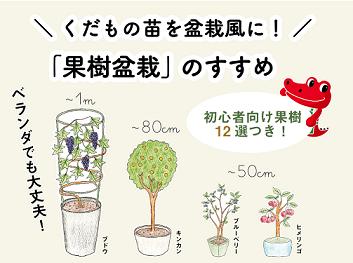 「果樹盆栽」のすすめ-リンク用アイコン