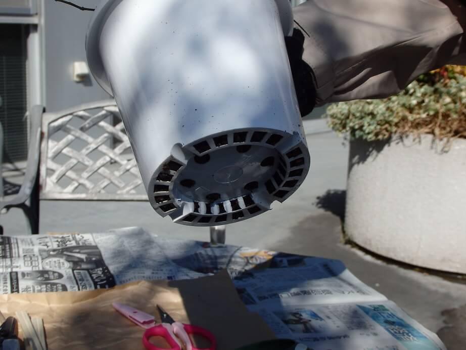 ブルーベリー苗-根の状態チェック-根鉢ができているか確認する写真