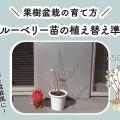 ブルーベリー苗の植え替え準備|果樹盆栽の育て方