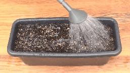 プランターに土を入れる手順説明-土にジョウロで水をかけて湿らせる様子の写真