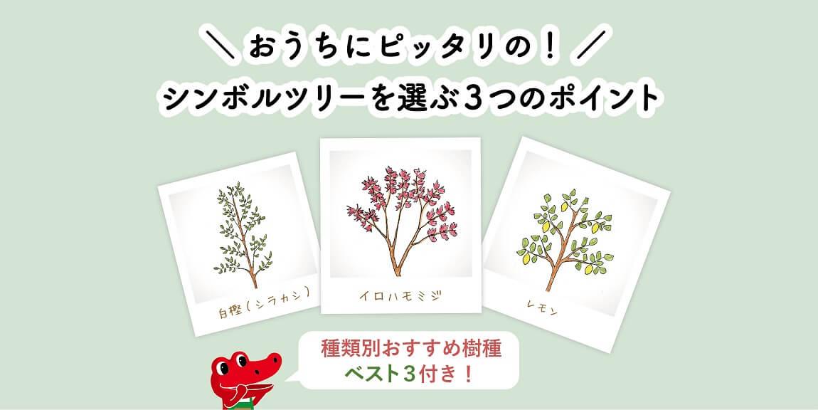 シンボルツリーを選ぶ3つのポイントとお手入れのコツ|種類別おすすめベスト3つき