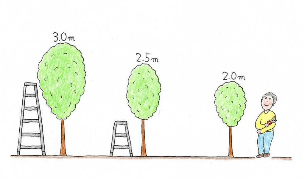自宅に合った樹高(木の高さ)を考えるー木の高さのイメージイラスト